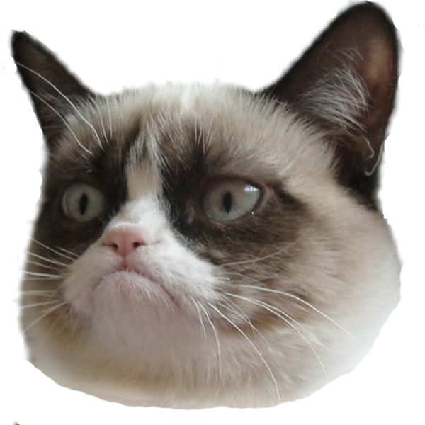 Gallery Grumpy Face Cat No